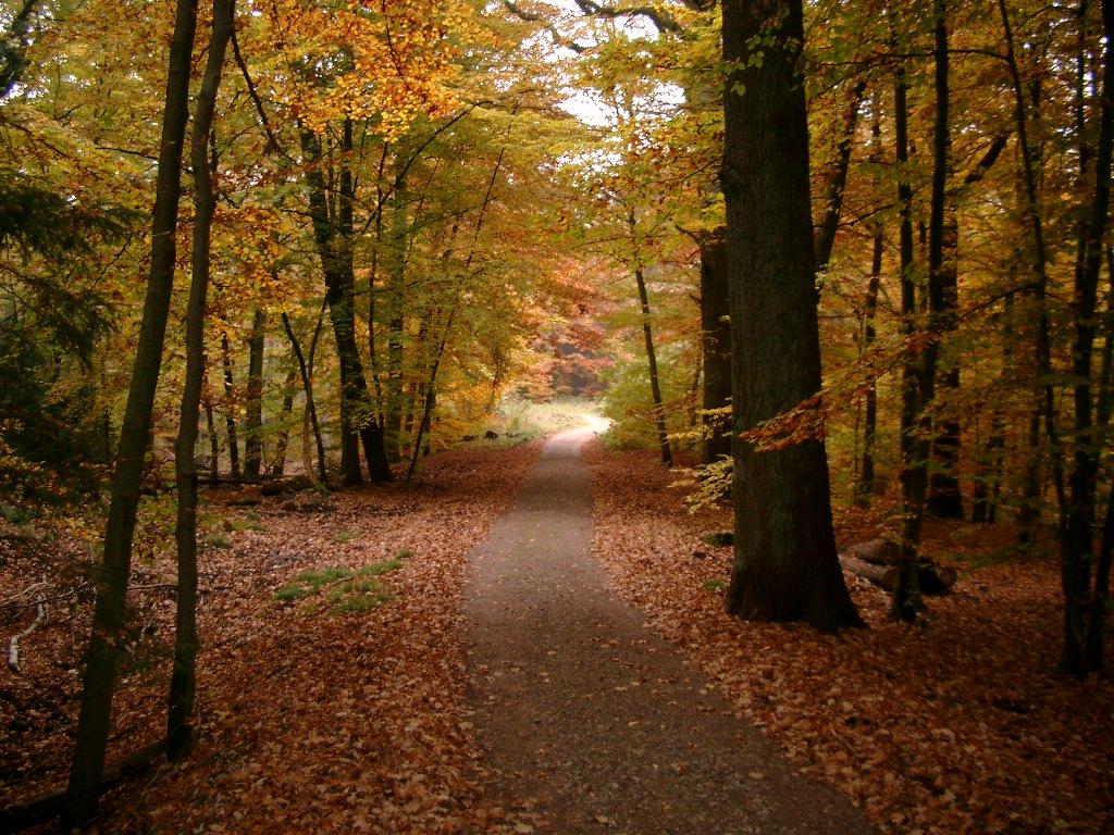 Herbst Wald autumn leaves  bilder24