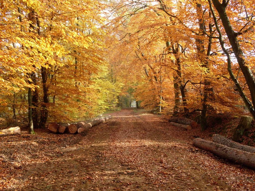 Herbst - Herbstwald